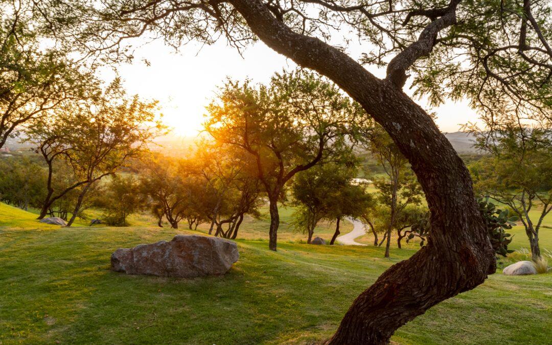 Calidad de vida: Los beneficios del paisaje